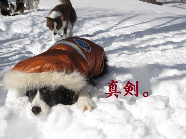 2012-02-11 雪遊び2012 034.jpg-1.jpg