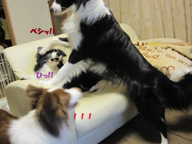 2012-06-22 1歳誕生日のアルファ 003.jpg-1.jpg
